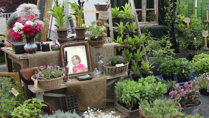 Actualités - Marché aux plantes